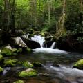 Экскурсия в  Smoky Mountains (Приключенческий лагерь).